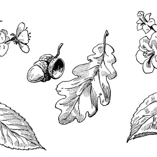 Leaves and Blossoms Clip Art