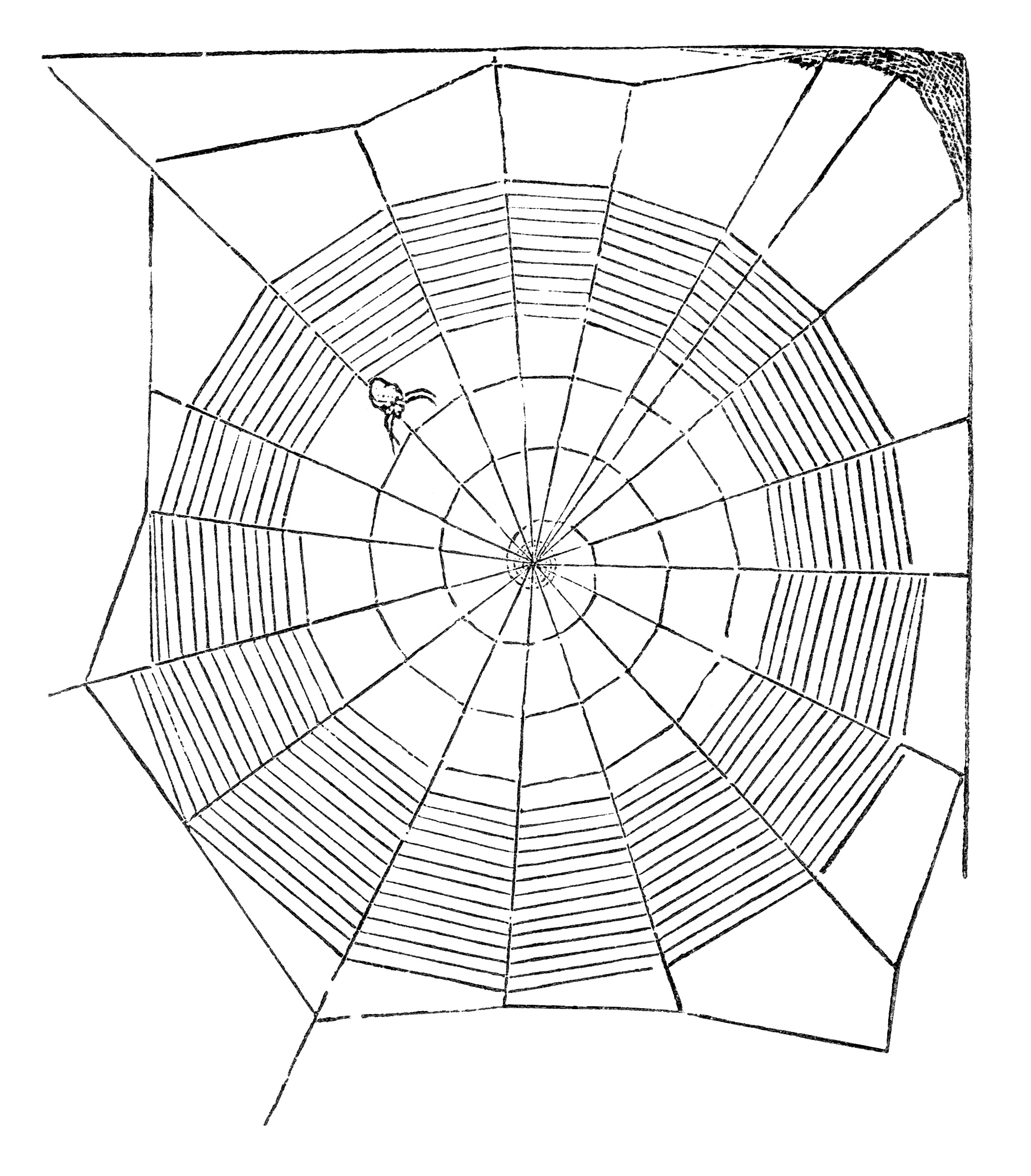 Spider And Web Free Vintage Clip Art