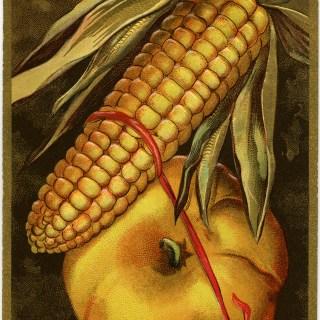 Thanksgiving Greetings Corn and Pumpkin