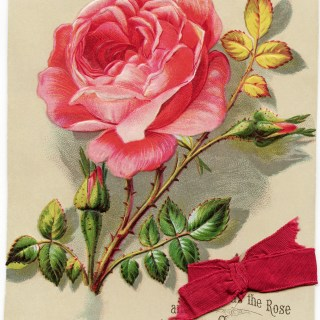 Victorian Christmas Rose Card ~ Free Download