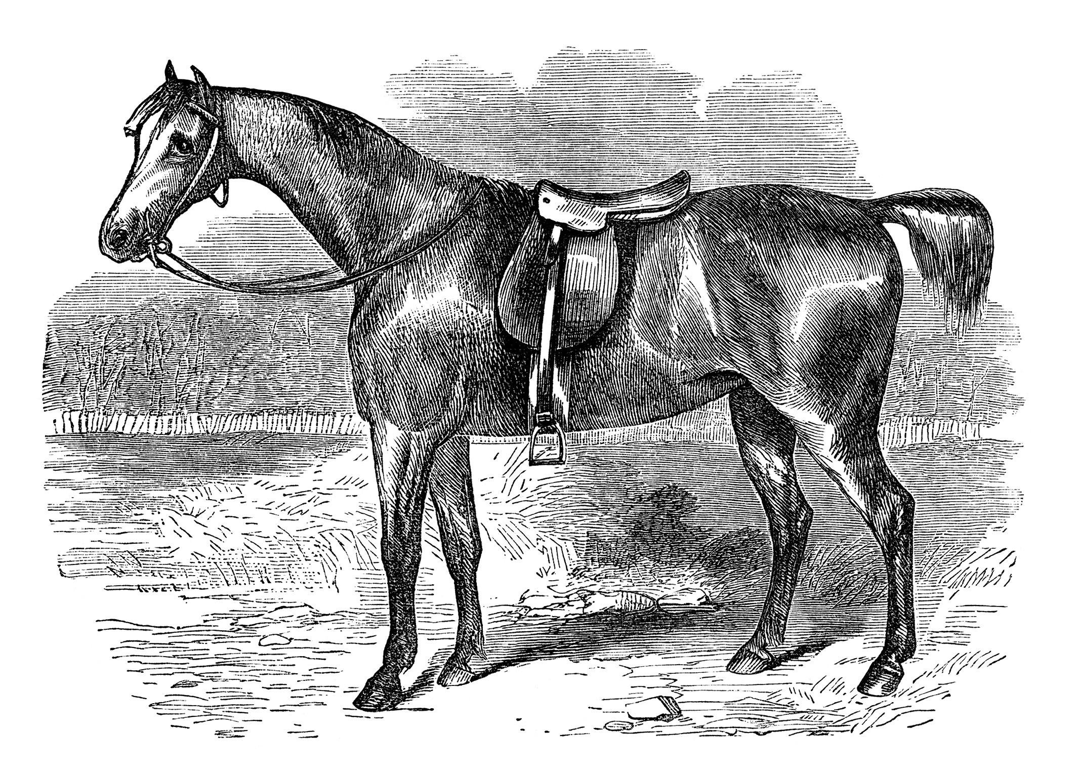 vintage horse covert hack free