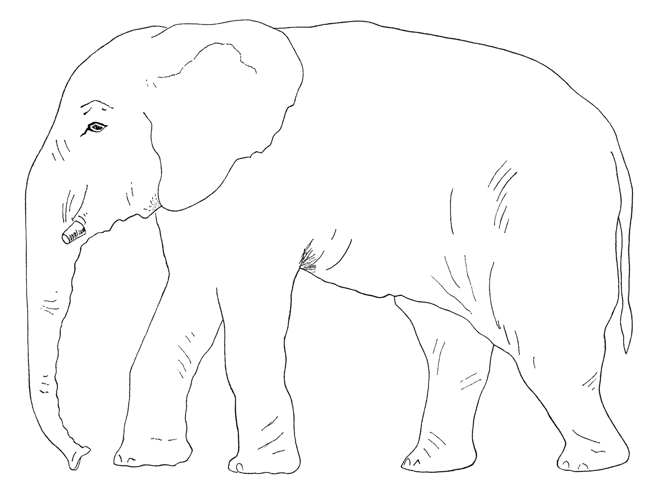 Old Book Page And Elephant Clip Art Free Vintage