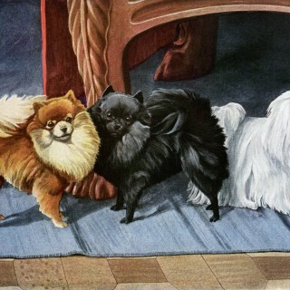 Pomeranians and Maltese Terrier Dogs ~ Free Vintage Image