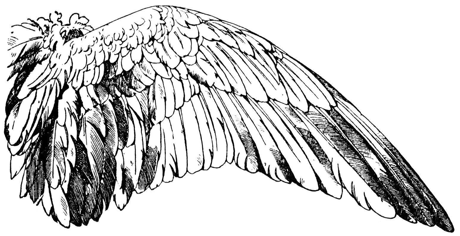 Wings Book Plate And Clip Art Free Vintage Graphics
