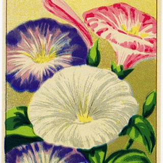 French Seed Label ~ Free Vintage Image
