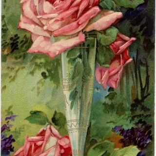 Pink Rose Birthday Greetings ~ Free Vintage Image