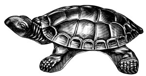 turtle cuspadore image, vintage catalog ad, black and white graphics free, vintage turtle clip art