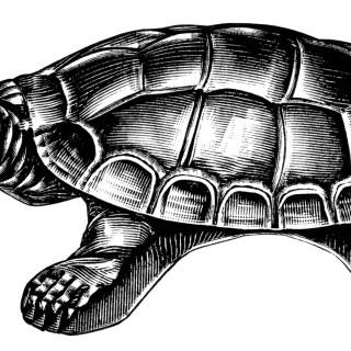 Turtle Cuspadore ~ Free Vintage Clip Art
