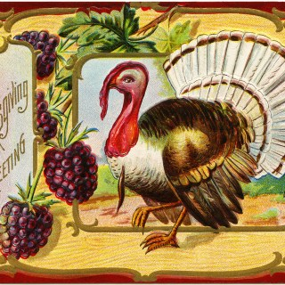 Thanksgiving Turkey Postcard ~ Free Vintage Image