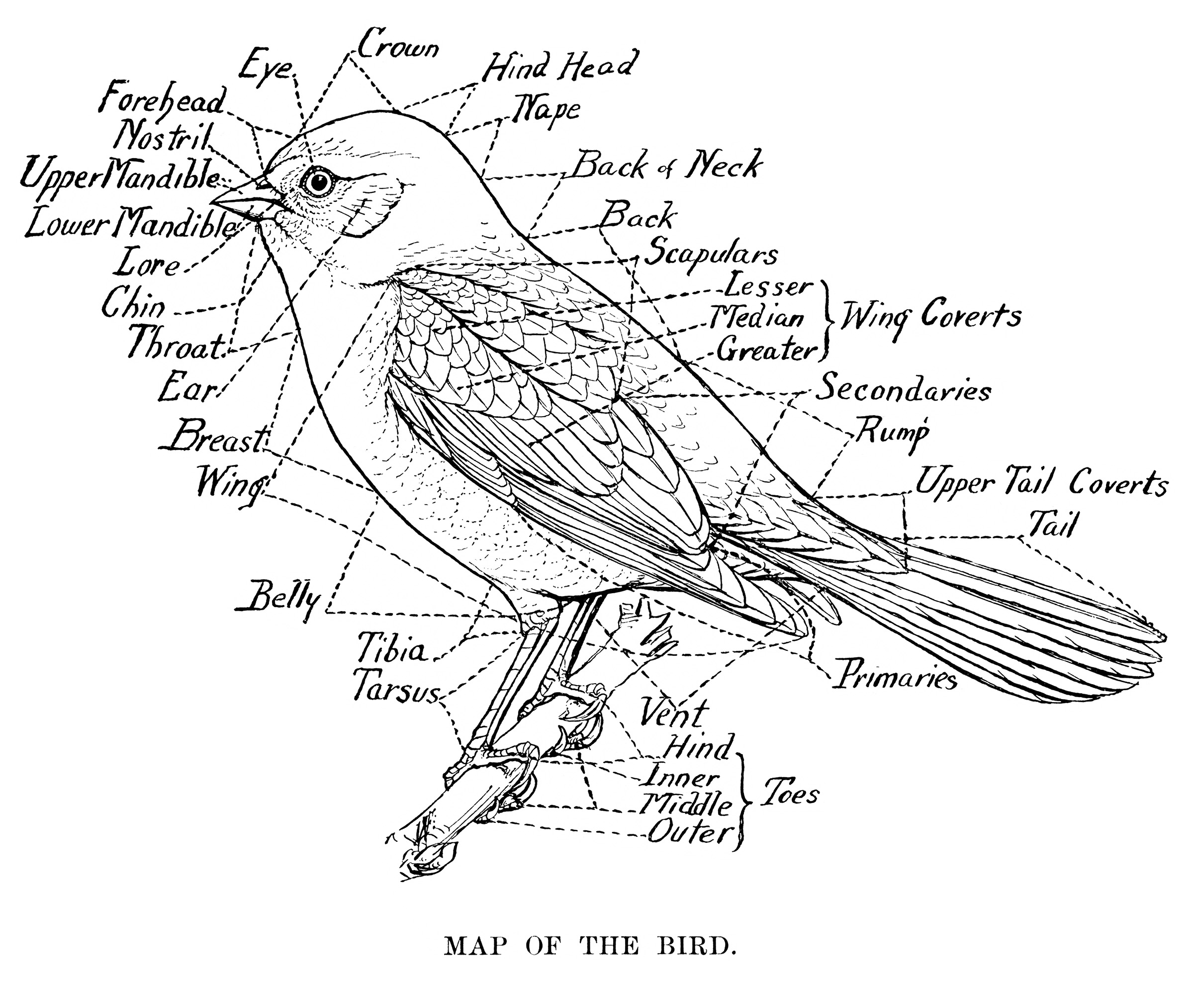 Map Of The Bird