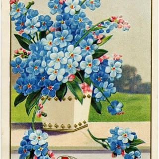 Blue Forget-Me-Nots ~ Vintage Postcard Image