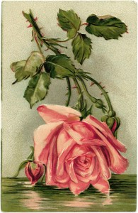 Victorian postcard graphics, vintage birthday postcard, pink rose clip art, old fashioned birthday card, vintage flower illustration