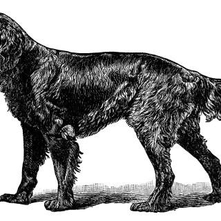 Gordon Setter Dog Engraving