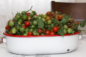 cherry tomato, fall harvest