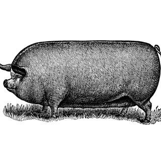 Vintage Pig Clip Art