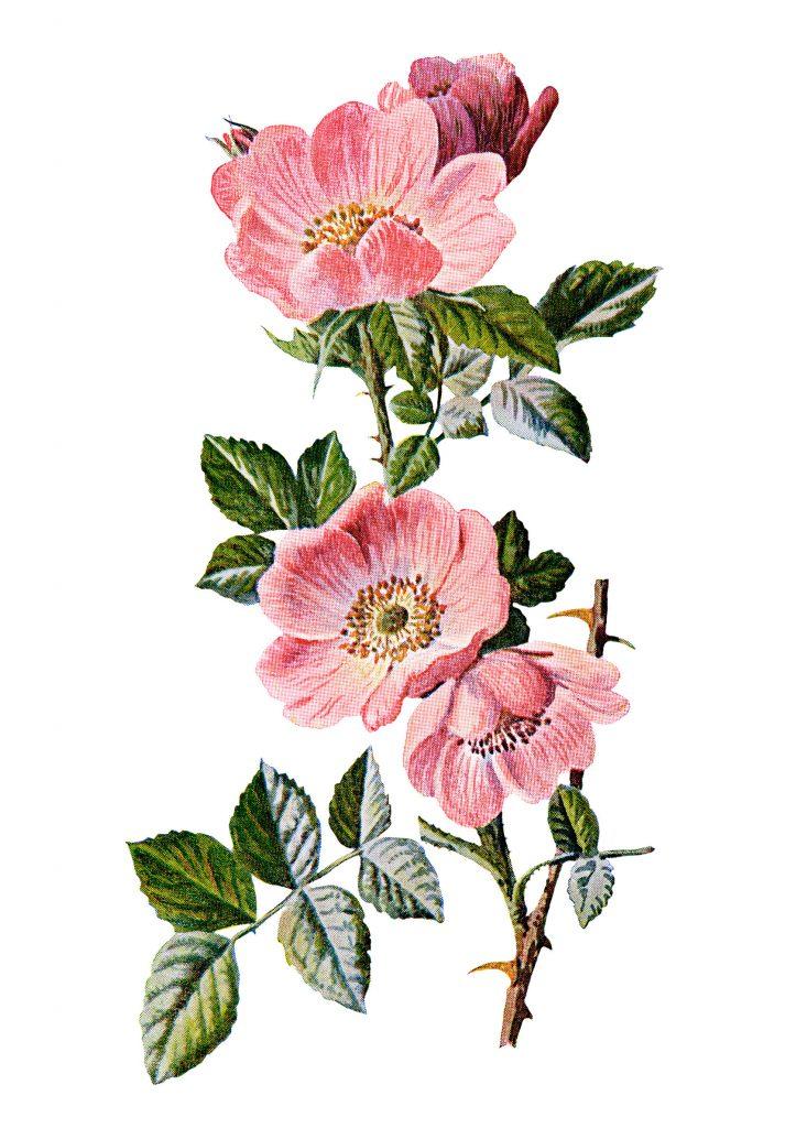 Sweet Briar Rose Old Design Shop Blog