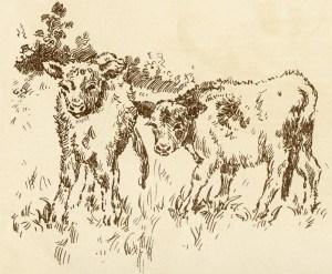 free vintage clip art calf cow in farm field