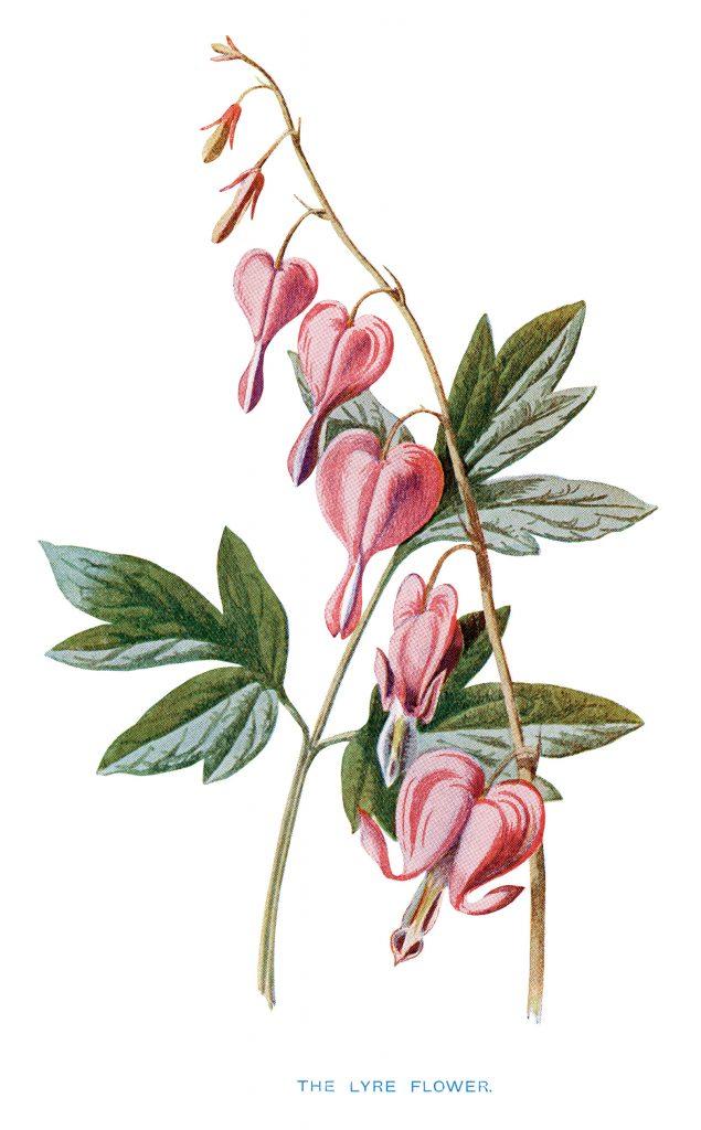 Free Vintage Printable Pink Flower Old Design Shop Blog