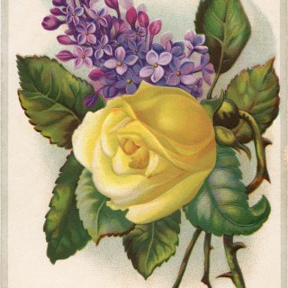 free clip art yellow rose purple lilac Victorian Tulip Soap card