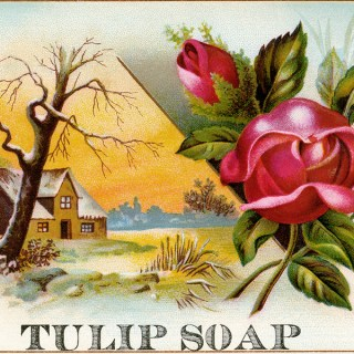 Free Vintage Clip Art Tulip Soap Trade Card