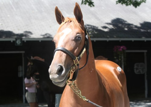 Hip 48,  2013 The Sarataoga Selected Yearling Sale