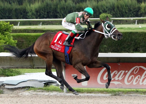 SCANDALOUS ACT The Florida Stallion Stakes of 2013 - Susan's Girl Division 08-24-13 CRC Finish