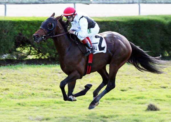 SPEAKING OF WHICH The Tropical Turf Handicap Gr 3 12-07-13 CRC - Inisde Fin