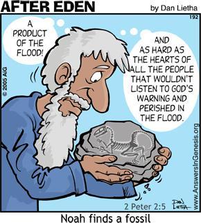 fosil Noe