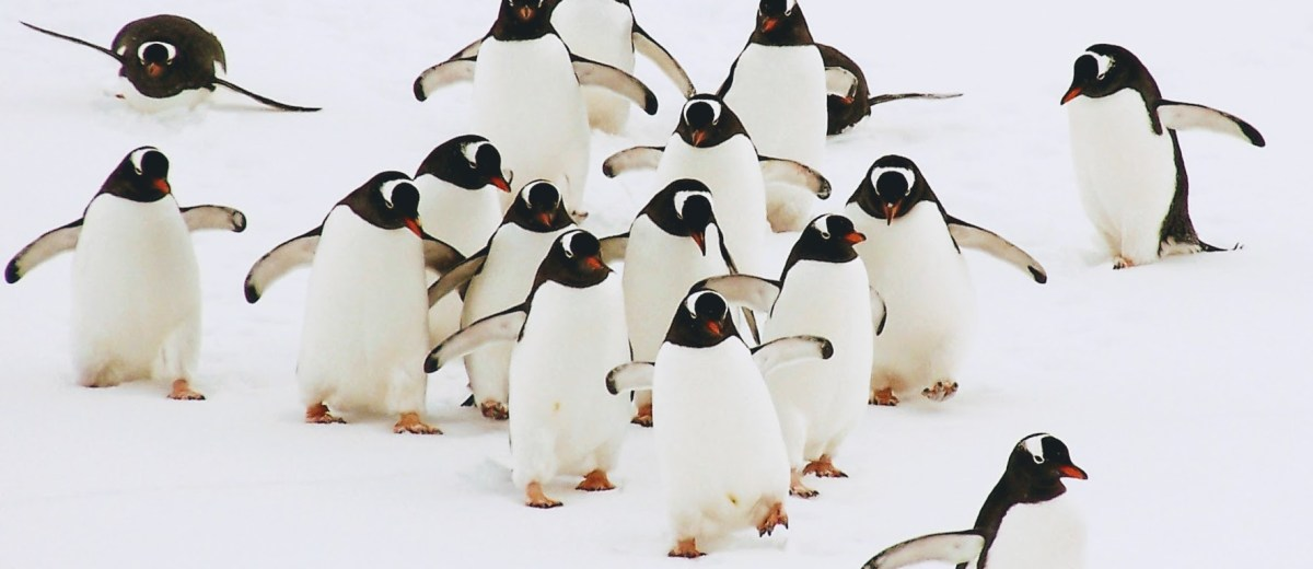 The Real March Of Penguins