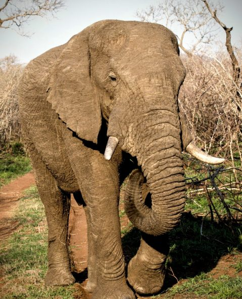 We're warned not to get any closer by this elephant.