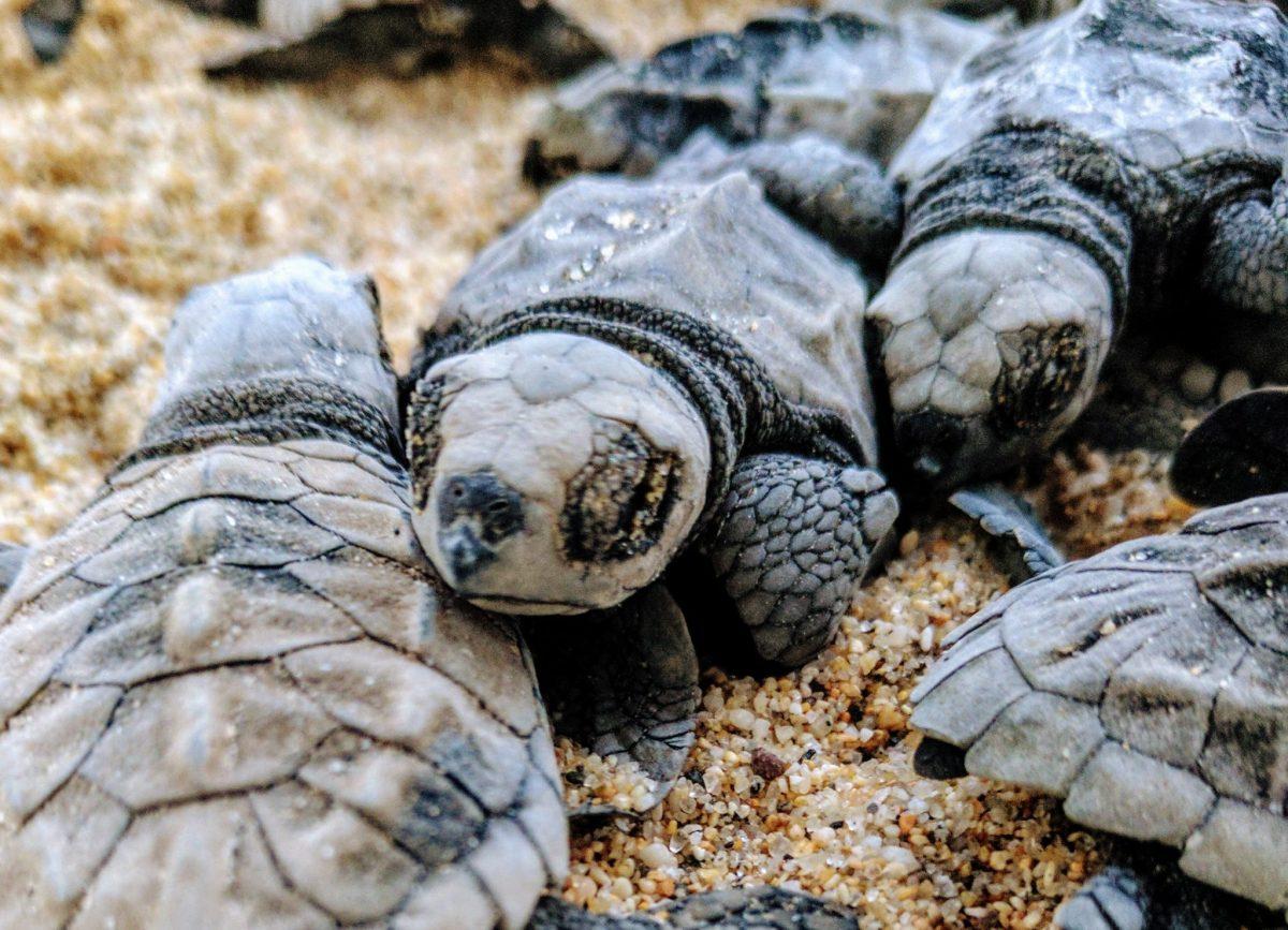 Celebrating World Turtle Day!