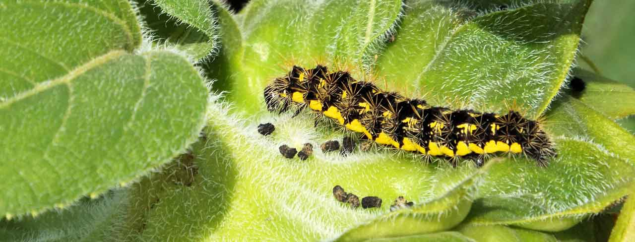 Catapiller on leaf
