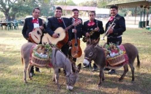 Miniature Donkey's with cold beverages & Mariachis to serenade your guests