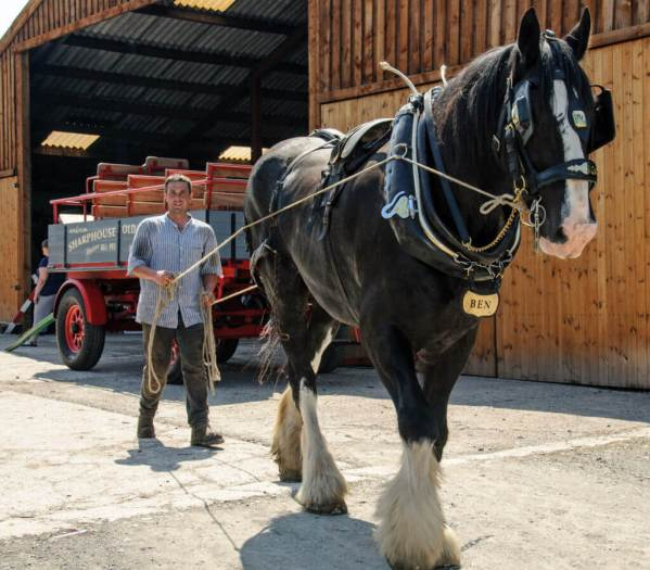 Alex and a shire horse