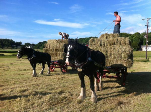 Hay time with horses