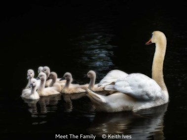 Keith Ives_Meet The Family