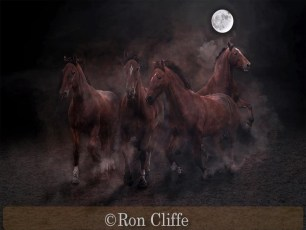 Very Highly Commended_Ron Cliffe_Stampede