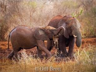 Winner_Gill Brett_Elephant Mudbath