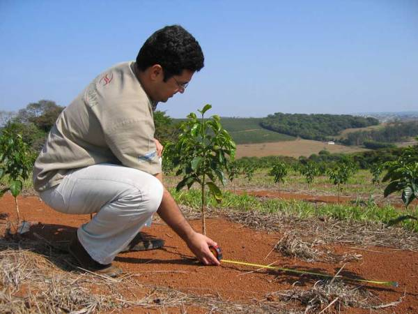Fazenda Samambaia1 BRAZIL - CAMPO ALEGRE