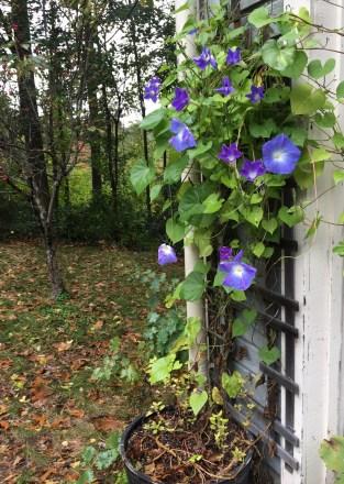 late bloomers.jpg