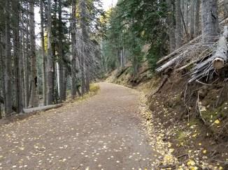 Fall Hiking in Lockett Meadow, Flagstaff, Arizona