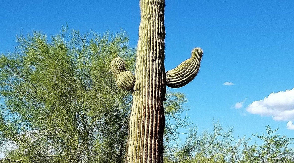 Arizona Saguaro Hiking Desert