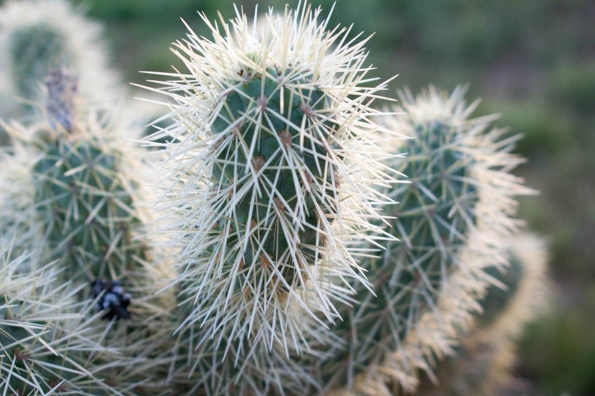 Apache Trail Cactus Hiking Desert Phoenix Arizona