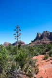 Sedona Courthouse Butte Trail-102