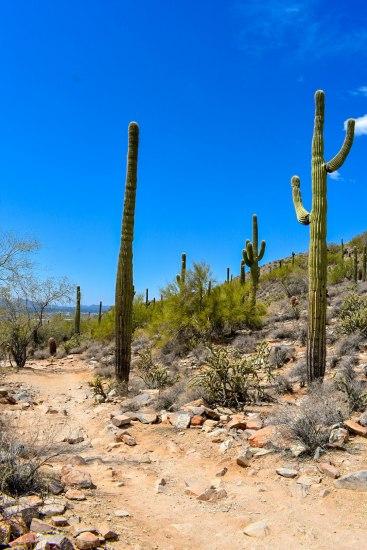 McDowell Sonoran Preserve Hiking Arizona Hike Rusty Ward