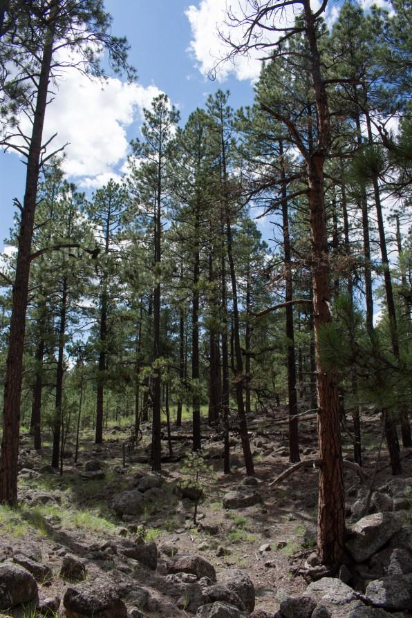 Flagstaff Hiking Arizona Rusty Ward