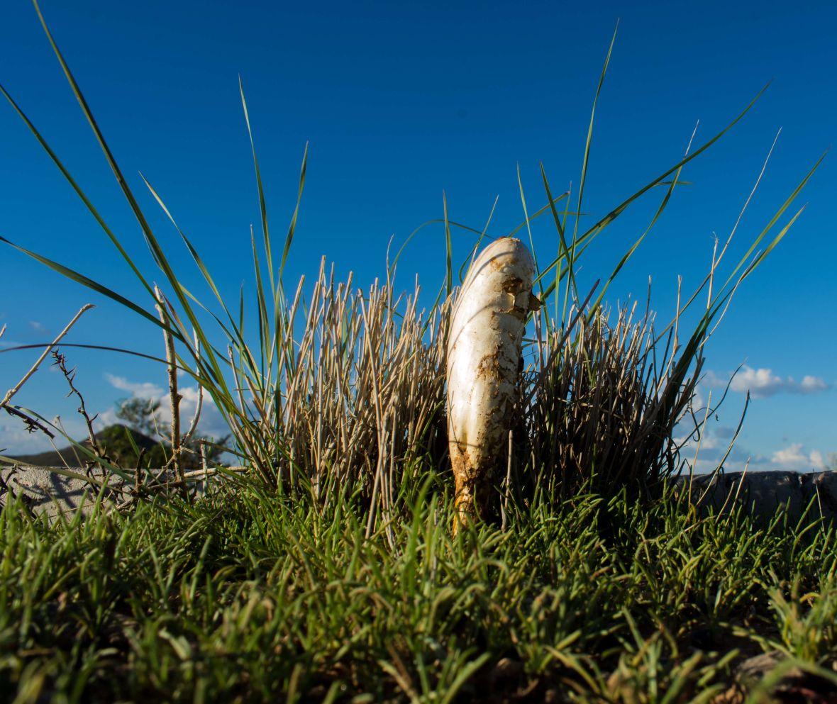 Mushrooms-11