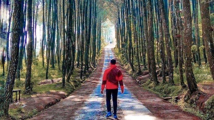 Pinusan Kragilan magelang