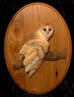 relief carving of a Barn Owl mounted on an oval plaque