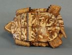Eastern Box turtle carved from basswood by dylan goodson bottom view
